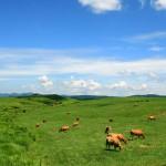 草原とあか牛