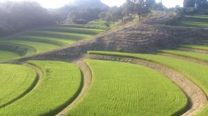 菅山の棚田2