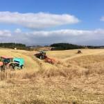 野草の刈り取りの様子を写した画像