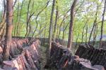 クヌギ林とため池がつなぐ国東半島宇佐の農林水産循環