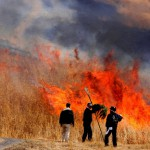Image of people doing burning off a field