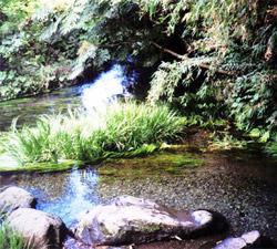 竹崎水源の写真