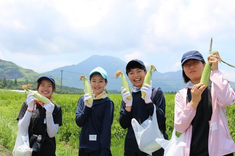トウモロコシ収穫3