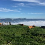 Image of a sea of clouds and dirt beef