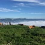 雲海とあか牛の画像