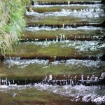 Image of Minamiaso-mura running off water group (flow weak groove)